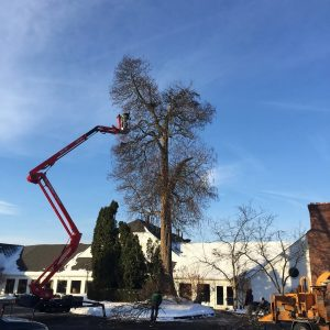 K and S Tree Service